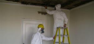 mold removal in United states
