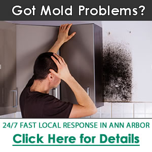 Ann Arbor's Best Home Restoration Contractor