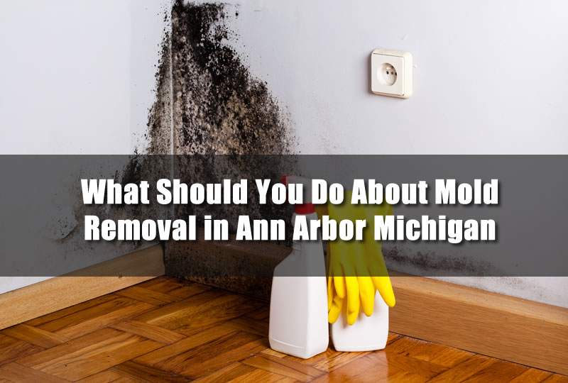What Should You Do About Mold Removal in Ann Arbor Michigan