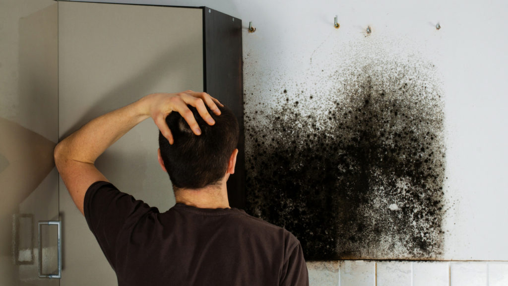 Should You Attempt Mold Removal in Michigan Yourself?