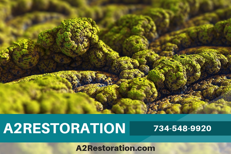 Will Your Mold Come Back After Getting Mold Remediation Service?